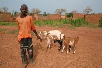 berger et ses chèvres dans le Sahel