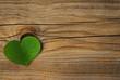 une feuille de trèfle vert symbole de l'environnement - green