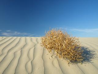 desert vert