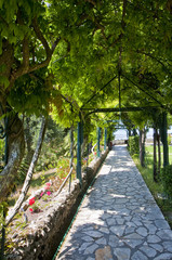Stone Walkway Under Grape Arbor