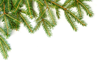 Christmas tree branch border
