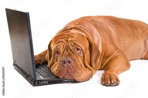Plexiglas Hond Tired Working