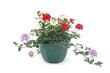 suspension florale
