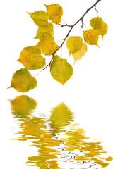 Buntes Laub im Herbst