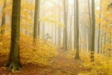 Fototapety Path leading through the autumnal forest in dense fog