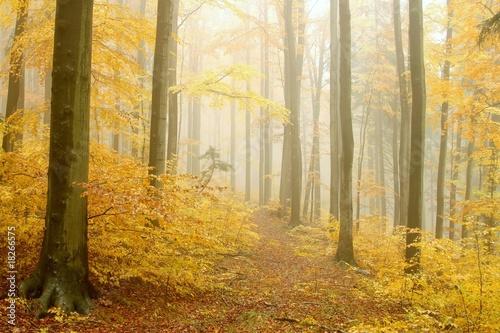 sciezka-prowadzaca-przez-jesienny-las-w-gestej-mgle