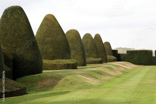 poster of creative shape of yew topiary in line. abstract