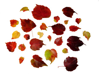 envolée de feuilles