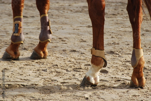 Leinwandbild Motiv Membres de cheval.