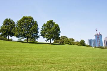 Trees on City Park Hill