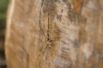 Selective focus on Sawn log