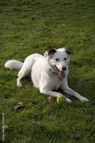 Bright eyed white dog
