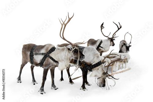 Fotobehang Antarctica 2 Four reindeers