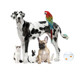Fototapety Group of pets standing in front of white background, studio shot