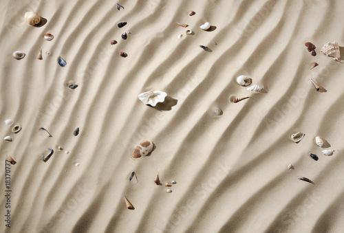 Textur-Serie Sandboden mit Muscheln