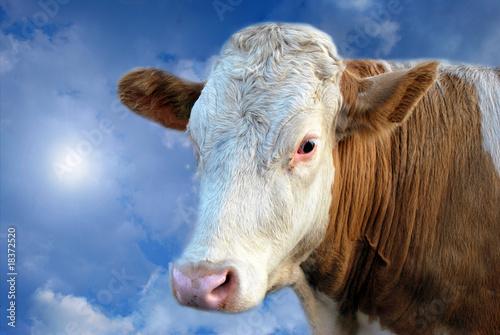 Fototapeten,kühe,kühe,traum,himmel