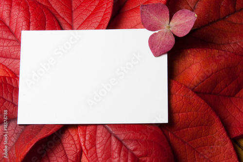 Red Leaves with card