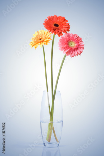 Bouquet from daisy-gerbera in glass vase