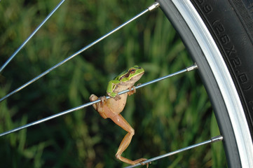 The riding Frog