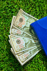 Dollars on the green grass