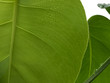 Leinwanddruck Bild New Leaf