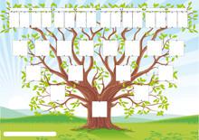 Drzewo genealogiczne, genealogia trzy