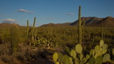 (1137) Saguaro National Monument Cactus Desert Arizona Sunset