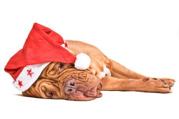 Santa Dog Tired