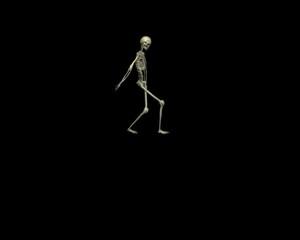 Anatomie - Skelett - springen und hüpfen