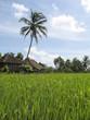 rice fields villa bali