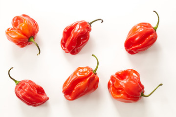 Habanero Chilis