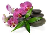 Fototapeta tło - storczyk - Kwiat