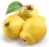 Fototapety quince on a white background