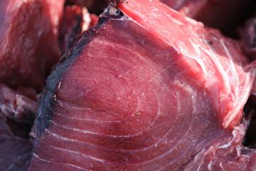 tunafish.014