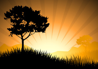 Amazing natural sunset landscape with tree silhouette