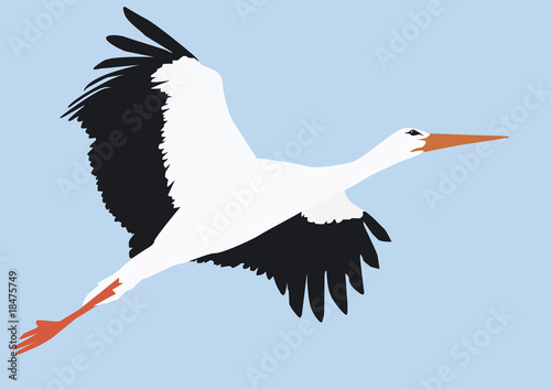 Storch Fliegend