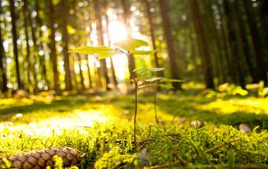 Idyllischer Wald durchflutet mit Sonnenstrahlen