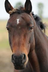 Pferde 78