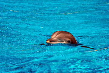 Head above water (Dolphin)