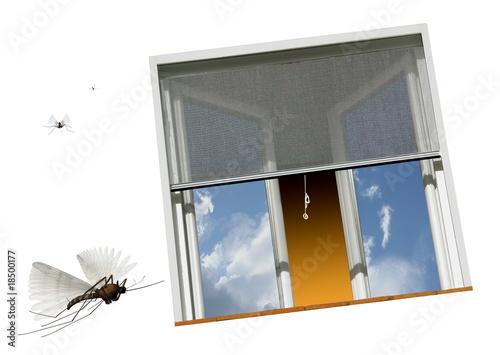 Moustiques - 18500177
