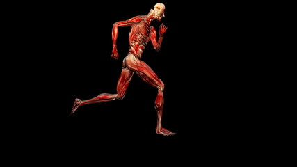 Silhouette musculature running,loop,alpha channel