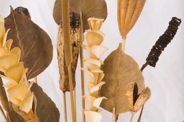 Dried Plant arrangement.