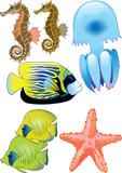 fish, starfish, jellyfish and seahorses poster