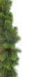 fir tree natural background - christmas