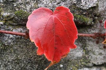 foglie in Autunno nella Foresta Nera