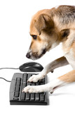 Doggy on keyboard with mouse poster