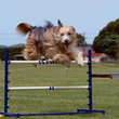 Beardy Jumping