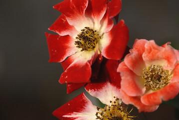 novemberblüte
