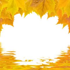 Bunte Blätter im Herbst am Wasser