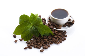 fresh coffee with coffee branch